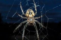Spinne am Bürofenster