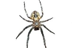 Spinne freigestellt