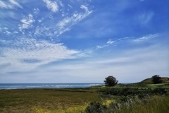 Day-15-Monterey-pic-016