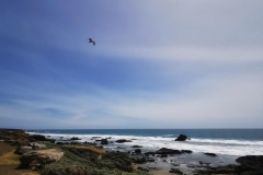 Day-15-Monterey-pic-019