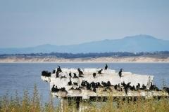 Day-15-Monterey-pic-030