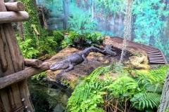 Krokodil Leipzig Tiergarten